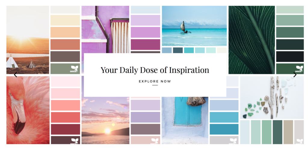 Design Seeds Color Inspiration for Social Media Branding